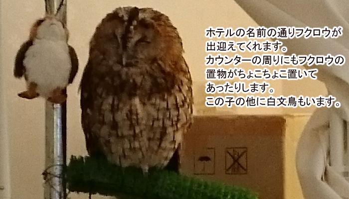 HOTEL OWL記事ホテル内1